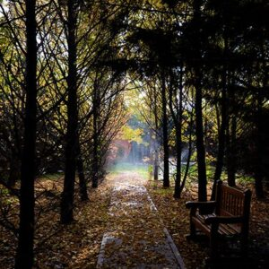 Stroll Under Falling Leaves