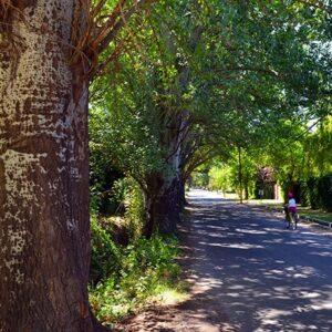 Afternoon Bike Ride in Chacras de Coria