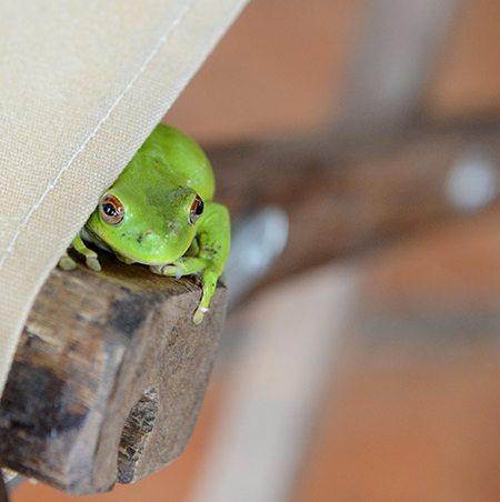 Cute Frog Hiding