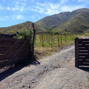 Gate ToHighest Vineyard In The World