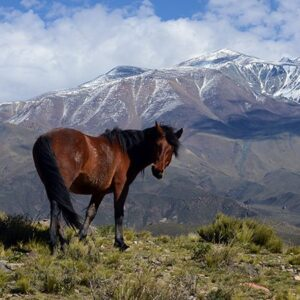 Wandering At The Andes