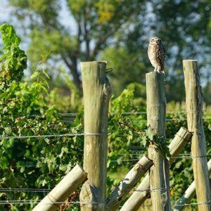 Vineyard Security