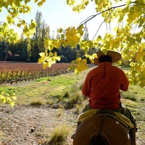Riding Through The Alamos Trees-6