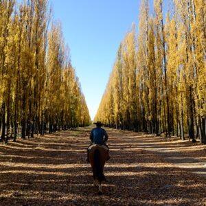 Riding Through The Alamos Trees-5