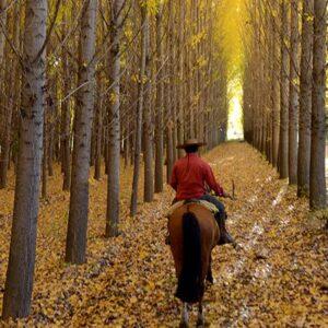 Riding Through The Alamos Trees-4