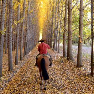 Riding Through The Alamos Trees-3