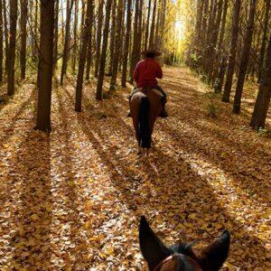 Riding Through The Alamos Trees-2