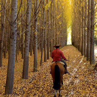 Autumn Riding