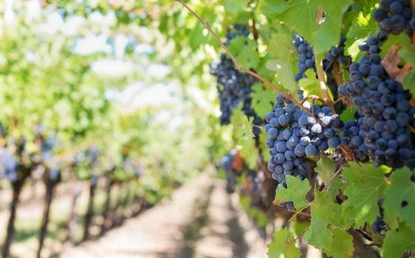 Wine Australia CEO Andreas Clark said: